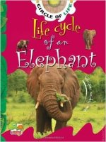 Life Cycle Of A Elephant