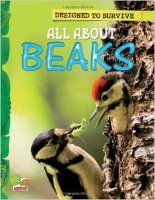 All About Beaks